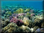 top of a shallow reef covered in corals to make garden-like seascape