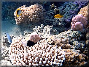 various fish and corals