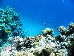 Sharm coral picture 1