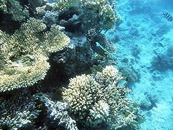 Sharm coral picture 6